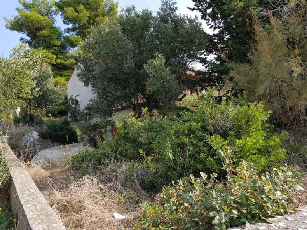 Property H1072 mediterranean garden at Rogoznica in Croatia.