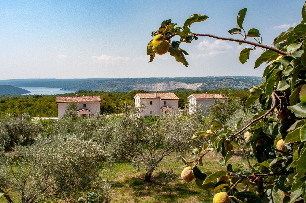 Stone houses with sea view in Istria, Croatia for sale - Panorama Scouting GmbH.