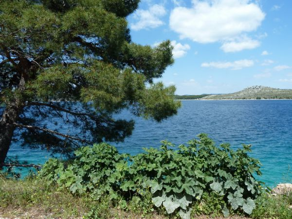 Land by the sea in Dalmatia for sale.